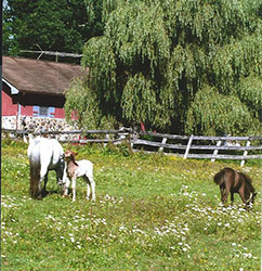 http://amodelminiatures.com/aboutus_files/2017/Foals-2017-sm.jpg