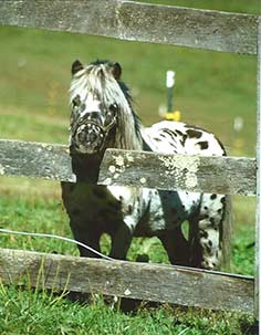 http://amodelminiatures.com/stallions_files/arapaho/Arapaho-Dec2017-sm.jpg