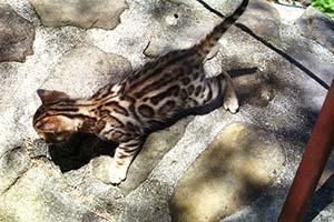 http://amodelminiatures.com/windstorm/Kittens-2017/7-sm.jpg